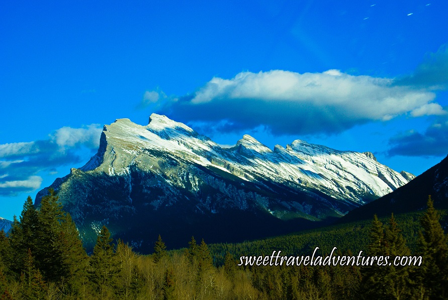 A large jagged mountain with an evergreen forest in front of it and blue sky with large fluffy white clouds