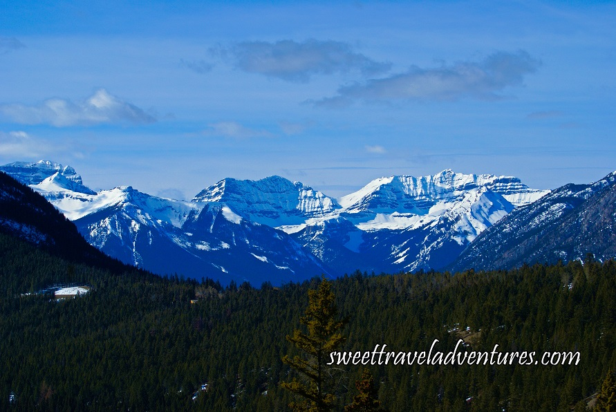An evergreen forest with snow covered mountains in the background and a light blue sky with a few fluffy clouds
