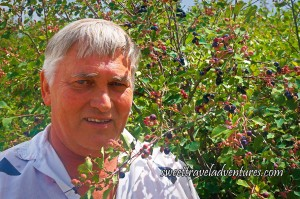 A Man With Grey Hair and a Grey Shirt is Standing to the Left of Some Bushes With Green Leaves and Purplish-Blue, Red, and Green Berries