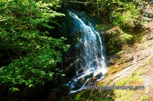 Waterfall Falling Onto Rock Surrounded by Green Trees