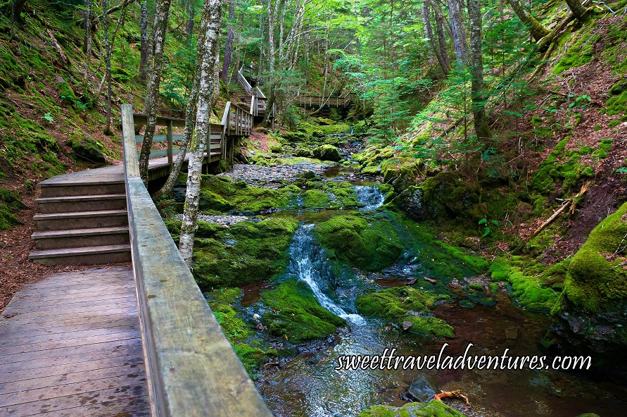 A Wooden Boardwalk on the Left With 5 Steps Every Few Metres  and Green Trees on Both Sides, to the Right of the Boardwalk is a Brook With a Gradual Decline and  Large Moss Covered Rocks, to the Right is a Steep Incline With Green Trees