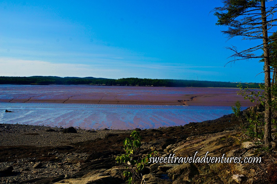 Blue Sky and Hard Packed Reddish Brown Mud With a Little Blue Water on Top, Footprints Through the Mud on the Right-Hand Side, a Dirt Shoreline With Two Small Trees on the Right and a Small Green Plant in the Middle, in the Distance the Land is Covered With Many Green Trees