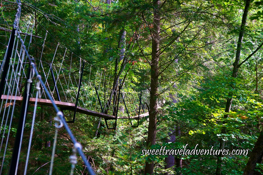 Angled View of Narrow Wooden Boardwalk With Steel Cable Guardrails Suspended Through Green Trees