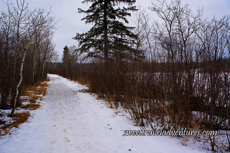 A Snowy Trail Lined With Bare Trees, to the Right is a Frozen River, and a Grey Sky