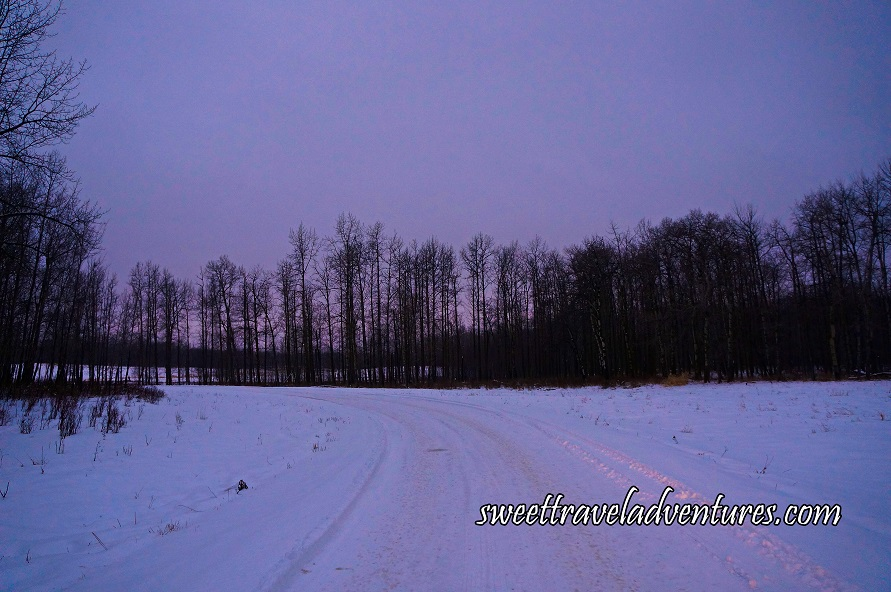 A Snowy Road Going Straight and Curving to the Left With Snow and Bare Trees on Either Side and In Front and a Light Purple/Blueish Sky